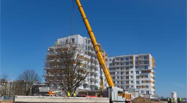 Trzy 80-tonowe dęby na terenie osiedla Comfort City przesadzone!