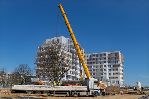 BARC Warszawa przesadza 70 tonowy dąb szypułkowy na osiedlu Comfort City przy pierwszym etapie Rubin