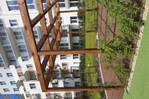 pergola obsadzona roślinami Comfort City Bursztyn czerwiec 2020