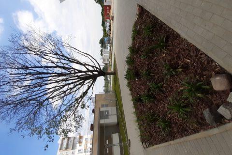 widok z patio Comfort City Bursztyn i uratowany dąb