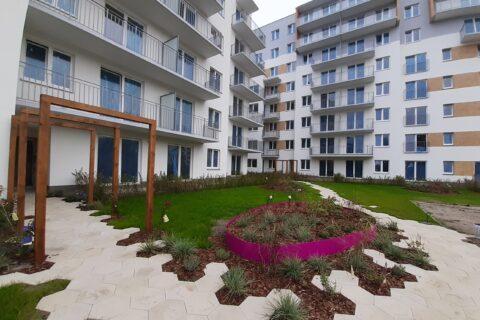 pierwsze nasadzenia roślin na patio Comfort City Ametyst wrzesień 2020